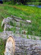 Chopped Logs Stock Photos