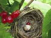 Small bird egg in nest Stock Photos