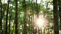 Forest in motion - stock footage