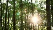 Forest in motion Stock Footage