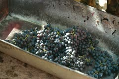 Homemade Winemaking Stock Footage