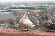 Two pigeons with a view Stock Photos