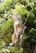 Red alert cat in tree Stock Photos