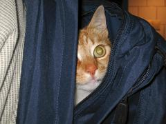 cat inside backpack - stock photo