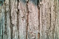 Stock Photo of pear tree bark