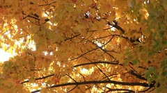 Golden Yellow Fall Leaves with Sun Sparkling in Autumn Sky - stock footage