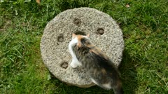 Young cat on old millstone Stock Footage