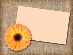 one orange flower with message-card - stock photo