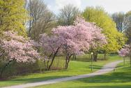 Stock Photo of spring walkway