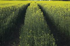 Crop Tracks Stock Photos