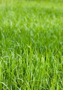 Green grass fields Stock Photos