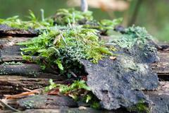 vegetation growing on an tree trunk - stock photo