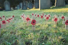 War Memorial Poppies Stock Photos