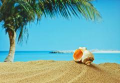 Stock Photo of seashell on sandy beach on the tropical coast