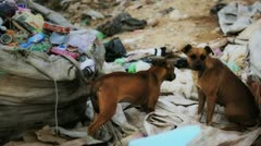 Dogs in Waste Dump - stock footage