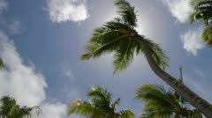 Palm tree in the wind at back light Stock Footage