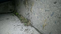 Ants Concrete Steps 001 - stock footage