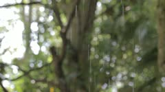 Rain drops. spring. Stock Footage