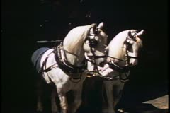 Horse dray, two team, pulling wagon full of beer, London, England, 1970's - stock footage