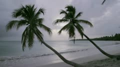 Palm trees in the wind at twilight Stock Footage