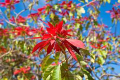 red flowers and blue sky - stock photo