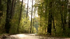 Autumn road in fores Stock Footage