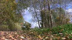 Falling leaves in the park Stock Footage