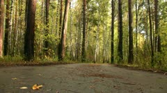 Wet road in the forest after the rain Stock Footage