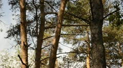 Birdhouse in a pine forest Stock Footage