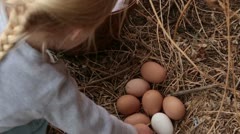 Young farm girl collects chicken eggs ground nest HD 3252 Stock Footage
