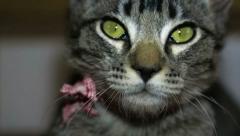 Cat Closeup Stock Footage