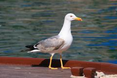 Sea gull on a fishing boat - stock photo