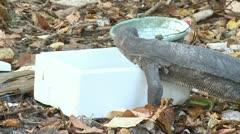 Huge Monitor Lizards In Indonesia Varanus Stock Footage