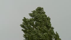 Tree in a storm Stock Footage