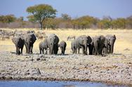 Elephants in Namibia at waterhole Stock Photos