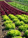 Stock Photo of salad