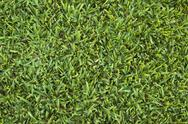 Stock Photo of lawn surface