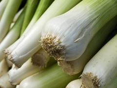 leek - stock photo