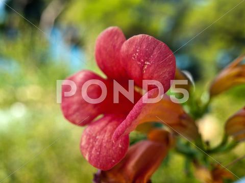 Stock photo of Red flower macro
