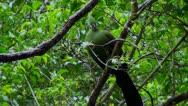 Knysna lourie in a tree  Stock Footage