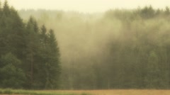 mist in woods - stock footage