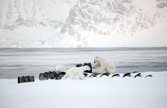 Polar bears playing with old barrels - stock photo