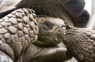 Giant Galapagos Tortoise Stock Photos