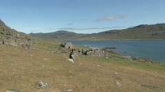 Greenland Hvalsey Nordic church ruin 6 Stock Footage