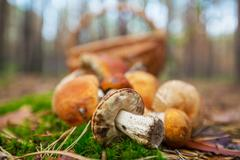 Stock Photo of mushroom