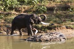Indian Elephant getting a bath in Mudhumalai Wildlife Reserve - stock photo