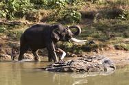 Indian Elephant getting a bath in Mudhumalai Wildlife Reserve Stock Photos