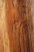 Wood texture of warm orange color Stock Photos