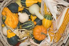 Stock Photo of gourds and corn