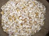 Bulk Garlic in a sack Stock Photos